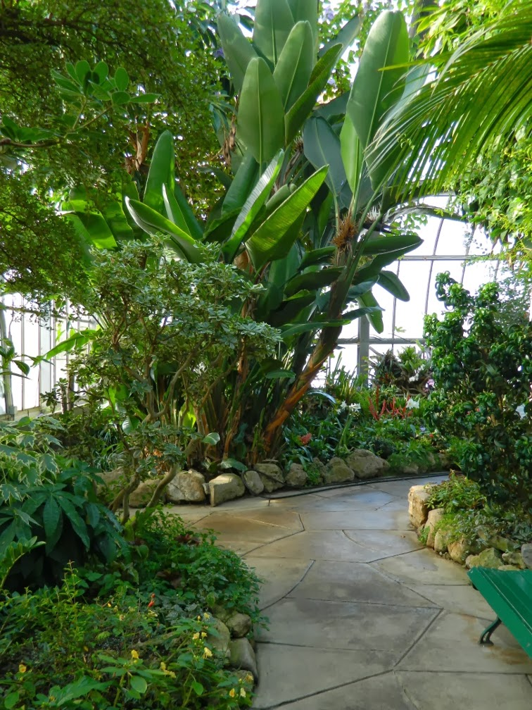 Centennial Park Conservatory tropical house path by garden muses-not another Toronto gardening blog