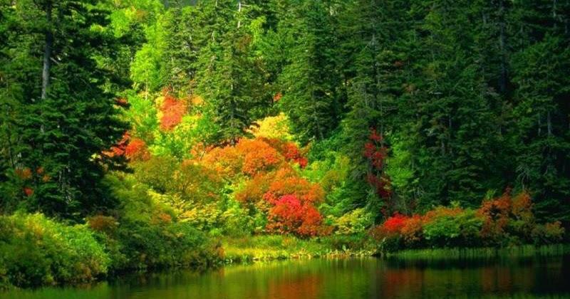 Arte y jardiner a dise o de jardines pinos rboles longevos for Variedades de pinos para jardin