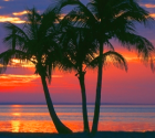 sunset with palm trees photograph