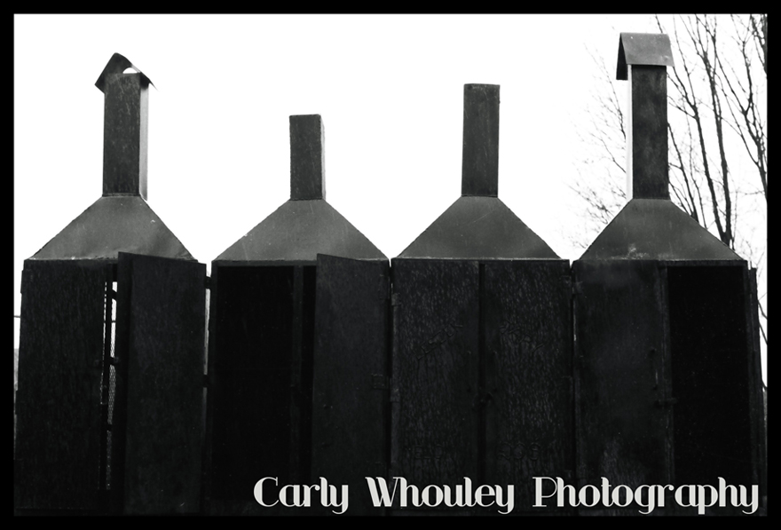 Carly Whouley // Fotographia