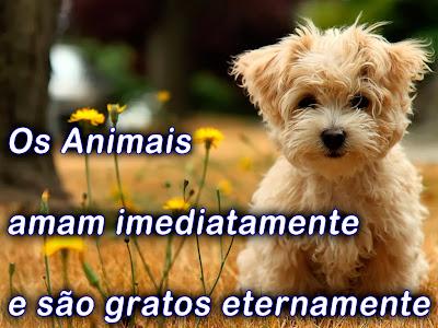 Frases sobre Animais: Frases para o Dia dos Animais