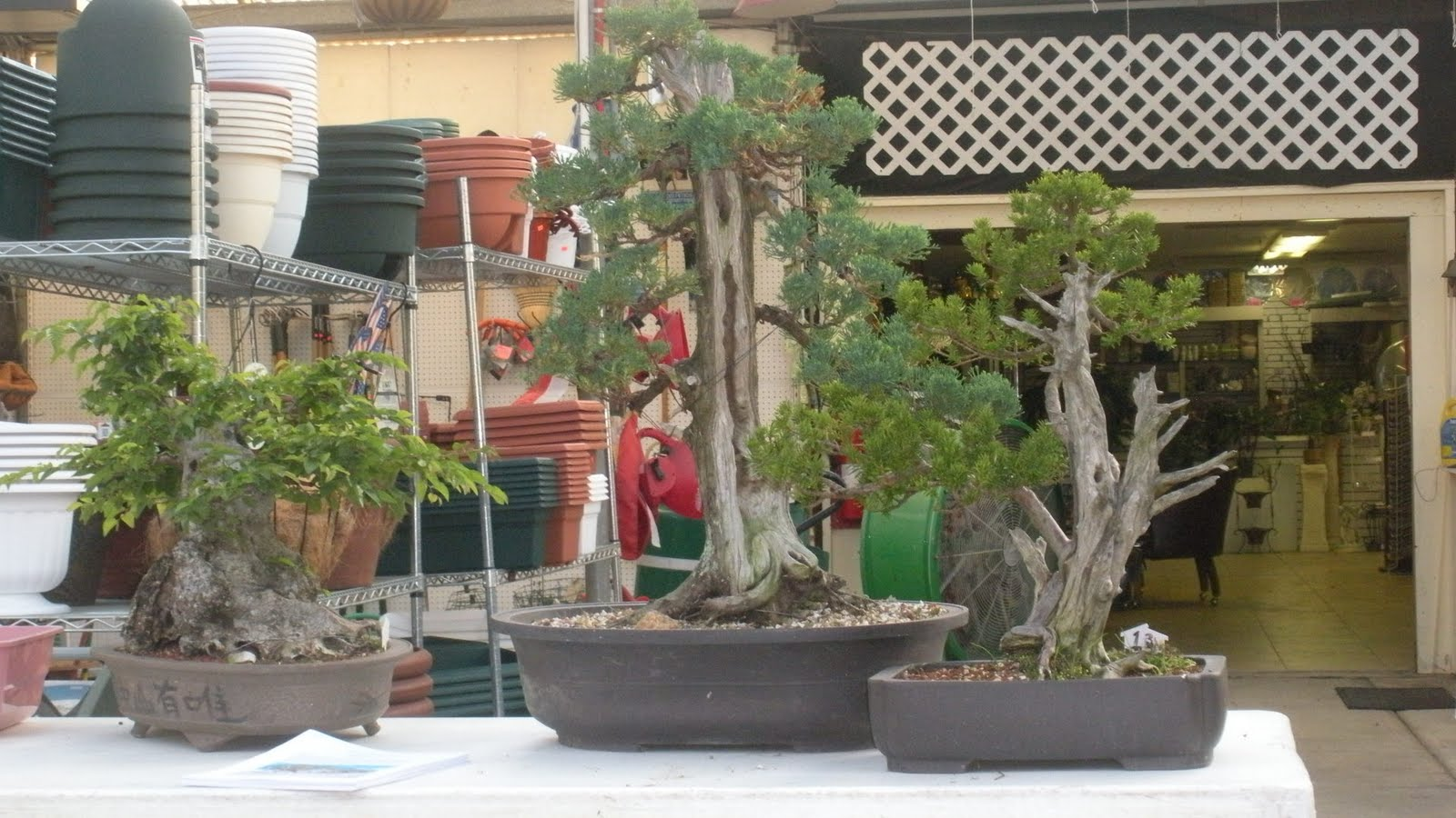 The Bonsai Society Of South Jersey Creating Deadwood On Bonsai