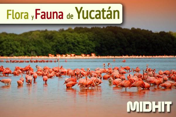 flora de la peninsula de yucatan:
