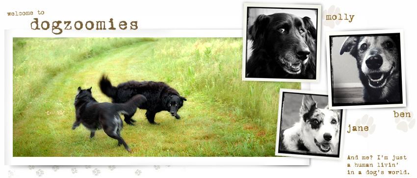 dogzoomies