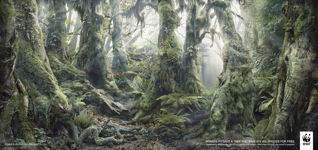 06-Anaïs-Boileau-WWF-Marcel-Hidden-Animals-in-the-Rainforest-www-designstack-co