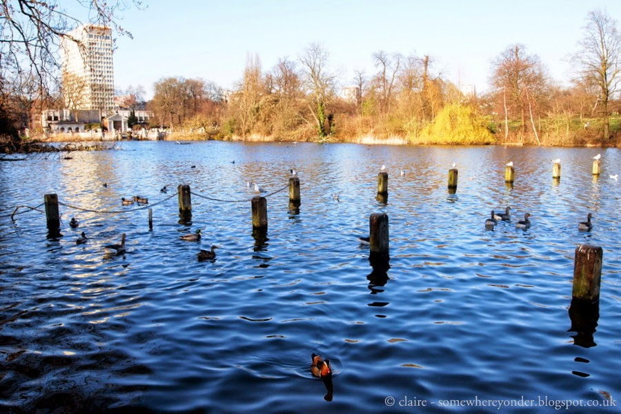 bird watching - Hyde Park