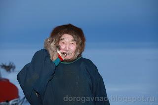 Хозяин тундры. Остров Вайгач. Ненецкий автономный округ. Природа НАО.