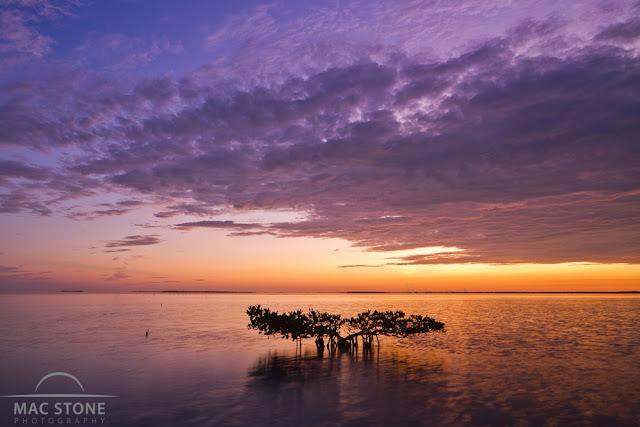 Mac Stone, Everglades