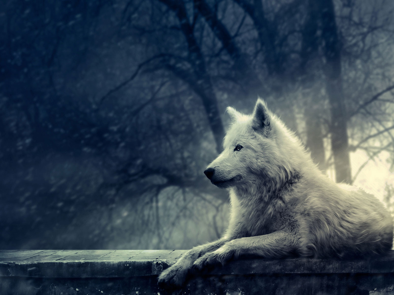pic new posts full hd wallpapers wolf