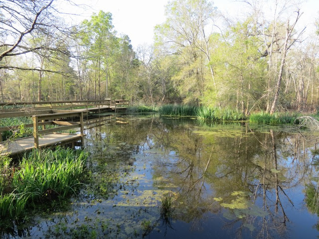 Pond and boardwalk at Armand Bayou Nature Center.