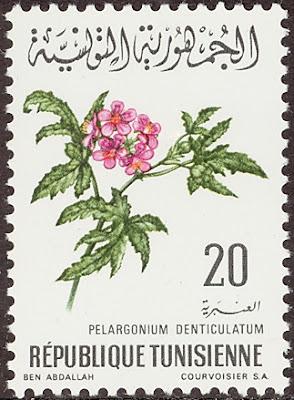 1969 Pelargonium Denticulatum,  شمعدانی/ Republique Tunisienne