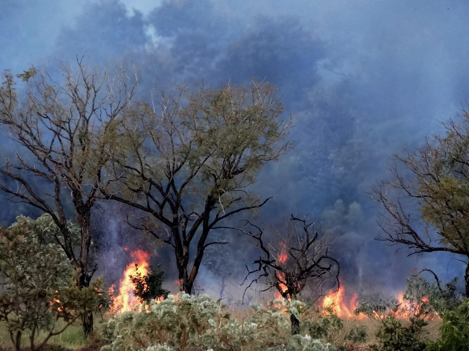 Fogo no Cerrado -  O fogo no cerrado pode iniciar-se por fatores naturais, isso ocorre através do acúmulo de biomassa seca, de palha, baixa umidade e alta temperatura, que acabam criando condições favoráveis para tal.-Foto de Humberto Russo - DF