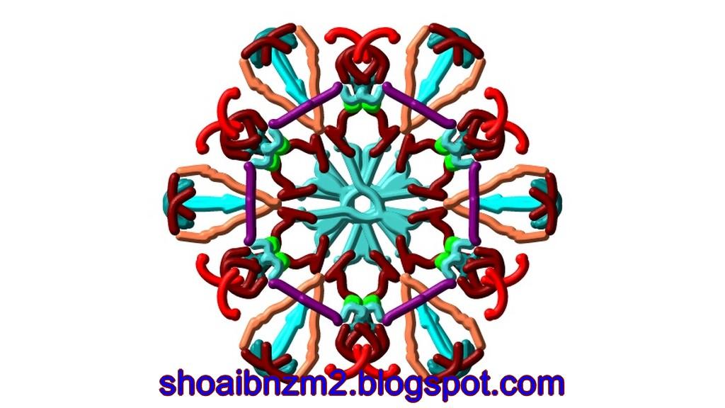 Floral Shape Art Designs Patterns