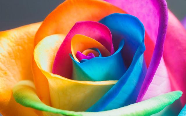 Beautiful Rainbow Flower Wallpaper