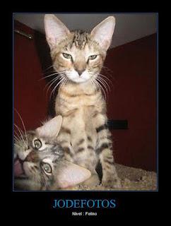Los Jode Fotos : Gatos