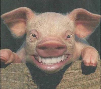 cerdo0133e1.jpg