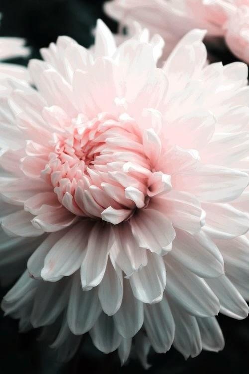 totalmente rosa