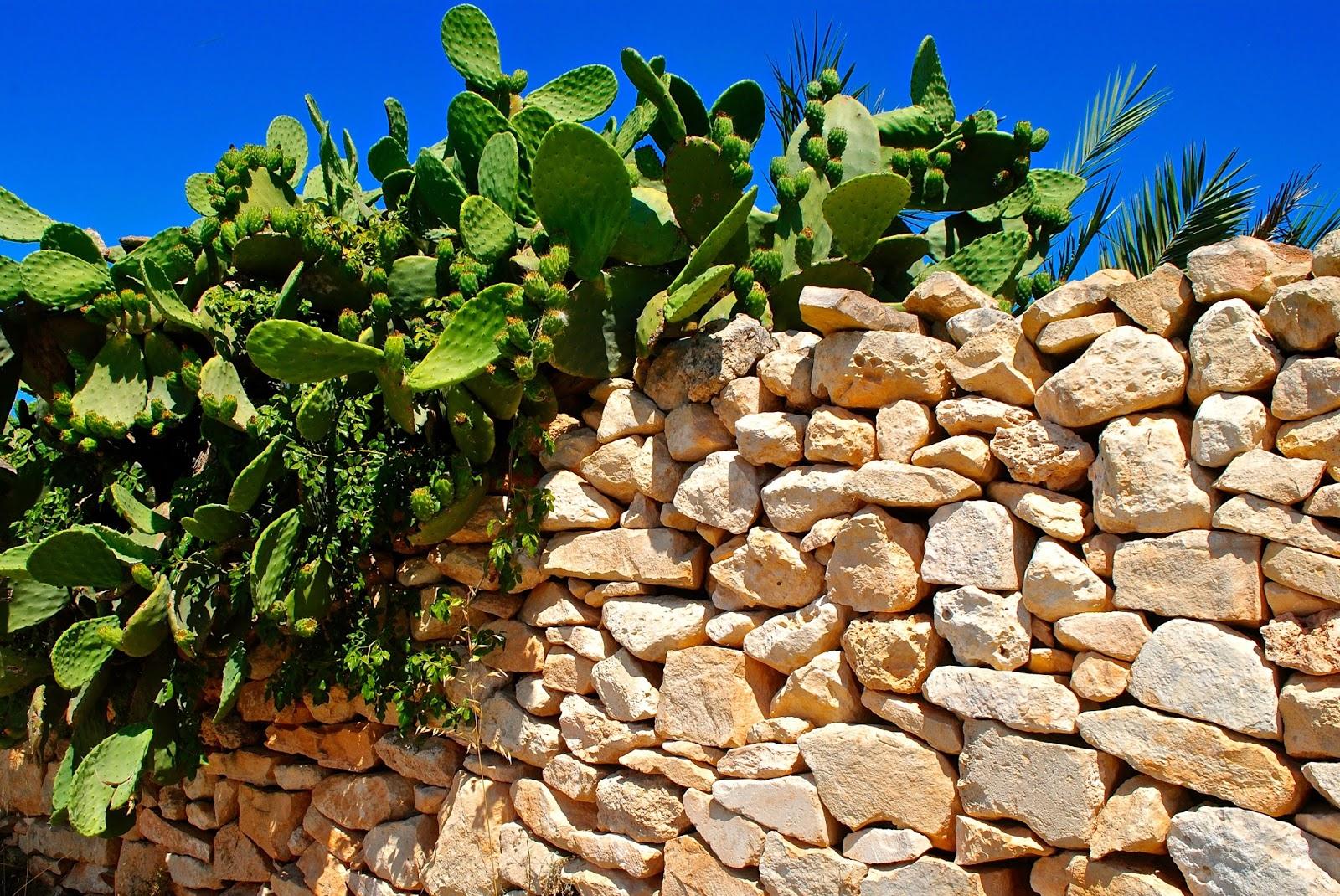 Prehistoric Megalithic Temples of Malta tour : Cacti at Mnajdra