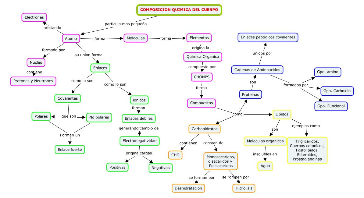 Blog de Fisiologia Medica de Miguel Angel Rivera Arce: Mapa ...