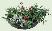 """zacinske biljke""""biljni cajevi"""""""