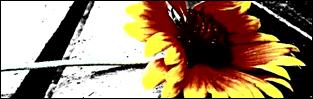 http://przezcierniedogwiazd2historie.blogspot.com/