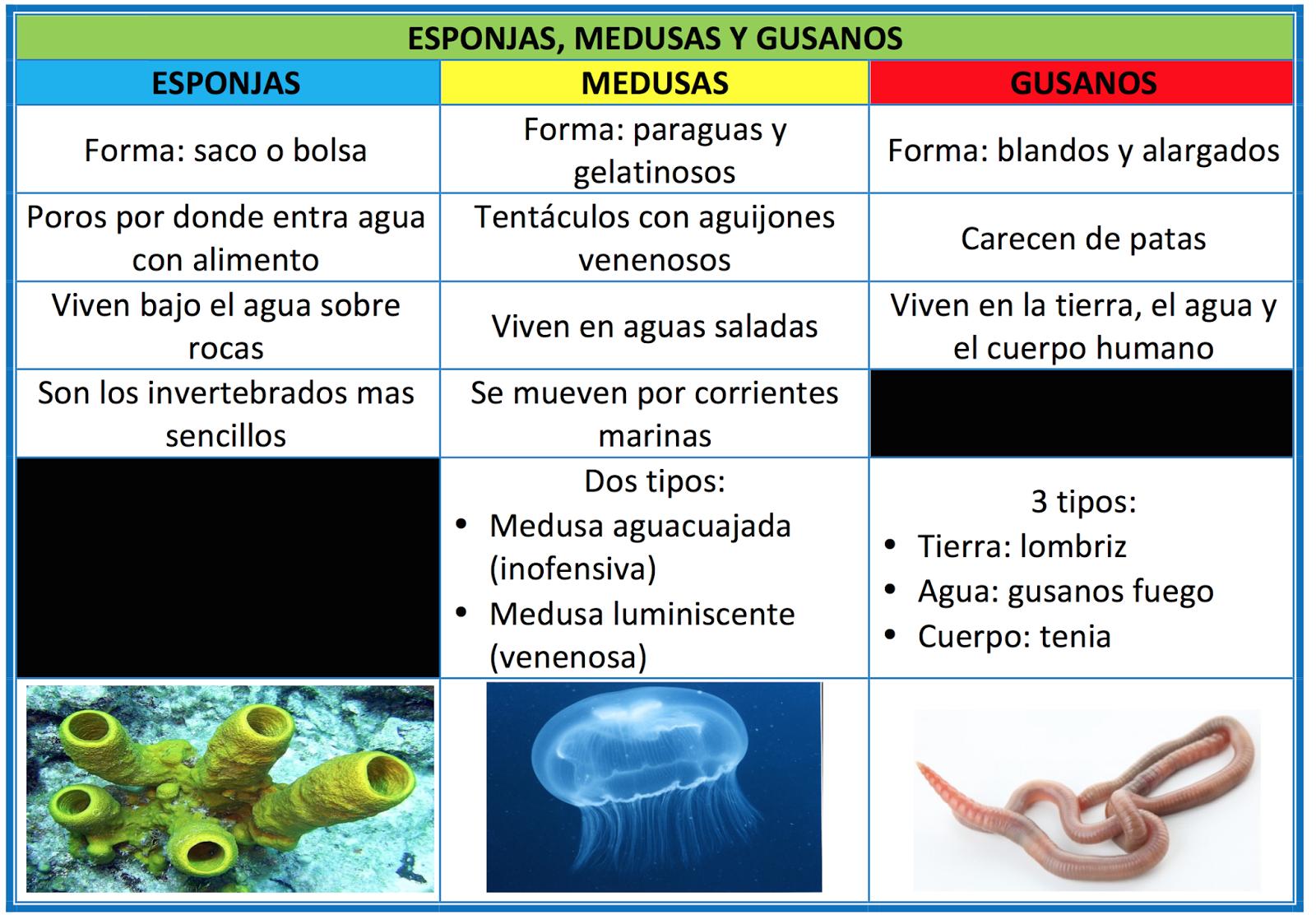 El trastero de educaci n primaria a invertebrados esponjas medusas y gusanos - Como se alimentan las medusas ...
