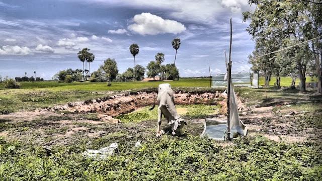 Campagne dans les environs de Siem Reap