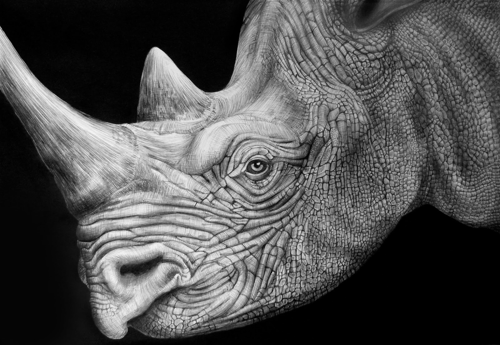 Rhinoceros Face