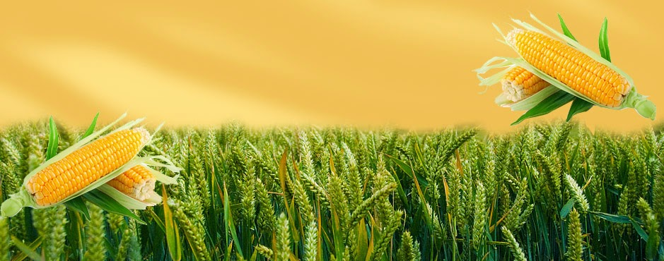 Agri Commodity Tips, free agri calls, maize trading, Future Trading Tips
