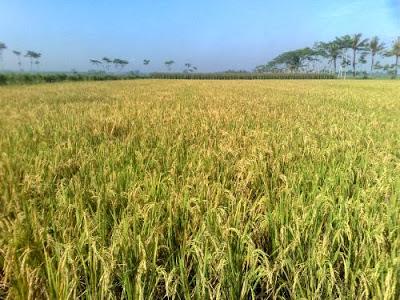peluang-bisnis-pertanian