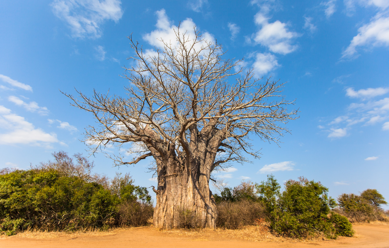 The Earth Of India All About Baobab Adansonia Digitata In India