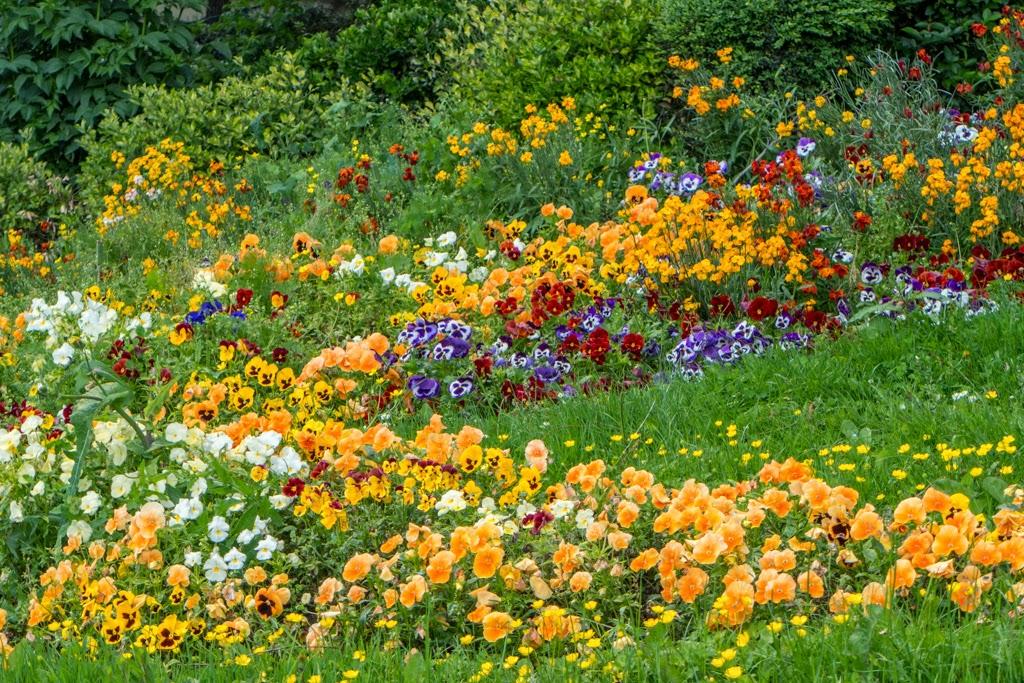 Paris France Montmartre flower garden