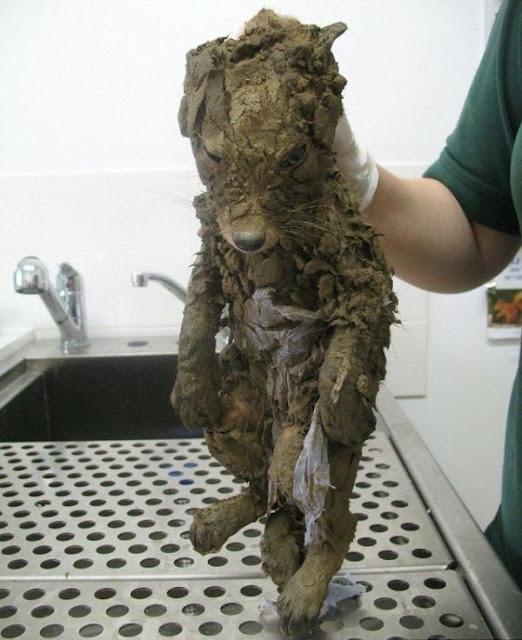 фото спасение животных
