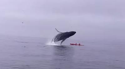 Φάλαινα καταπλάκωσε κανό