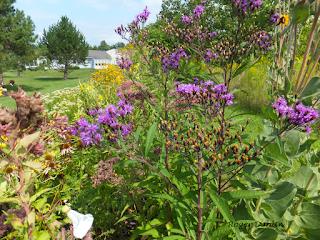 Wildflower garden McHarrie Town, Baldwinsville, NY, USA