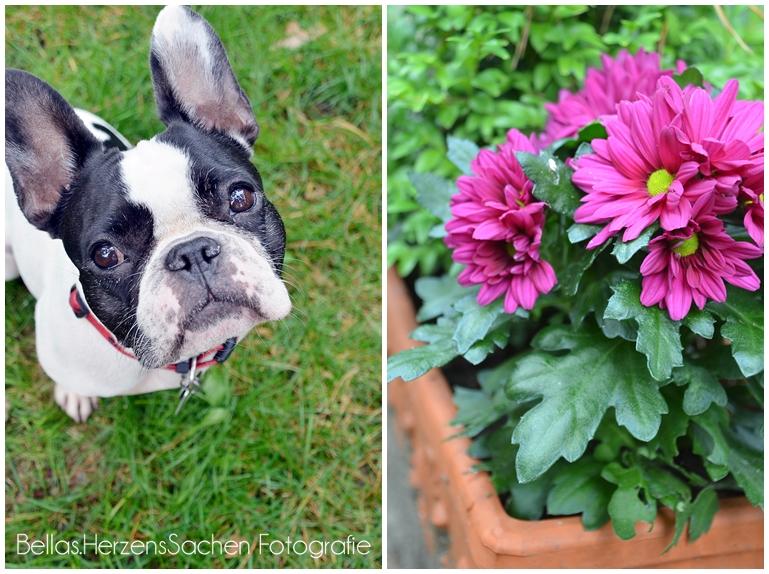 Paula und Blume
