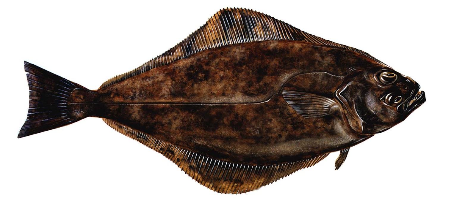 на что ловится рыба в черном море
