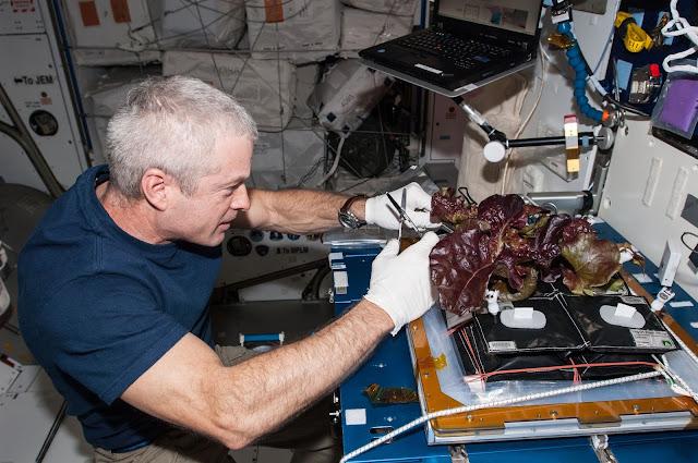 Astronot Menjelma Sebagai Petani NASA VEG 01