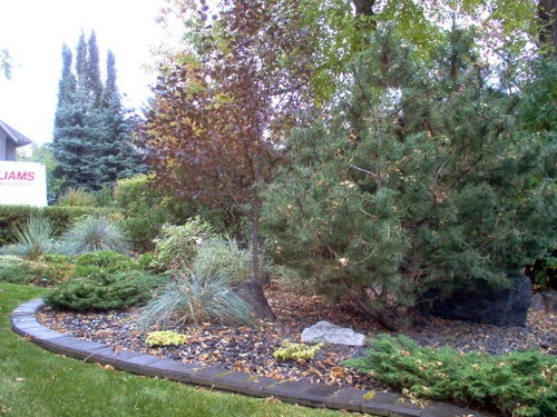 Scape It Posts Xeriscaping Your Landscape