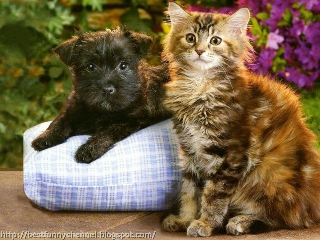 Black puppy and kitten.