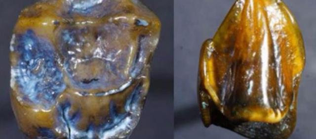 Ανατρέπεται το παραμύθι τους για την προέλευσης του ανθρώπου από την Αφρική: Βρέθηκαν δόντια 9,7 εκατ. ετών στην Ευρώπη