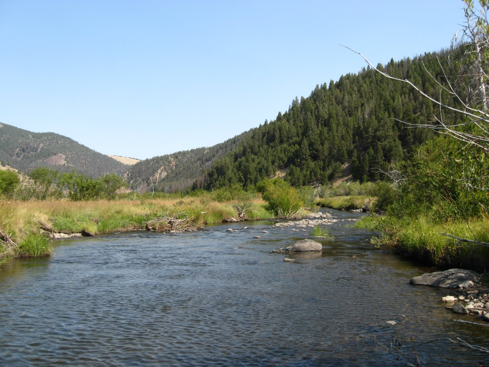 Clayti bug trout adventures trip report red rock creek for Boulder creek fishing