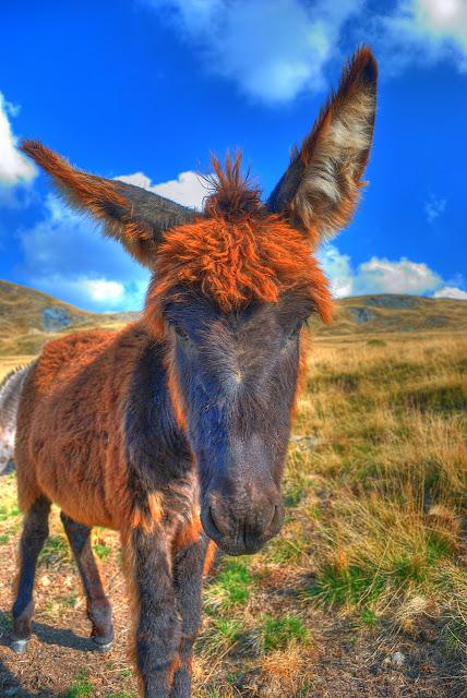 Donkey HDR