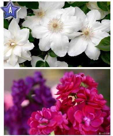 40 Beautiful Flowers Wallpapers 1920 X 1200 Set 9 Www