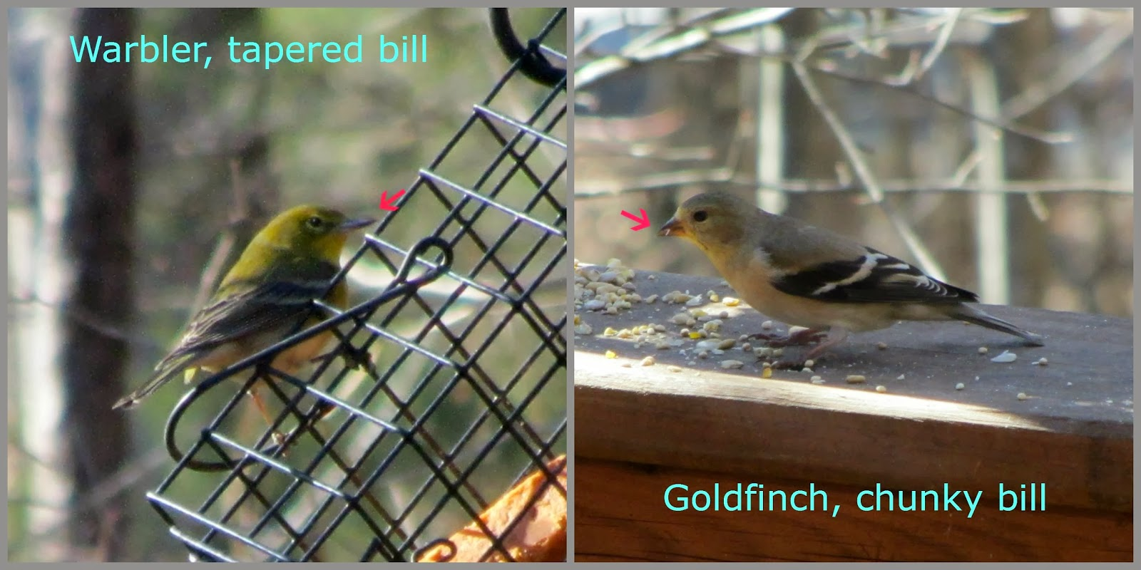 bright garden usa from a photo bird american eating modern feeder goldfinch birds including yellow stock