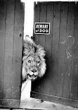 Attenti al cucciolo