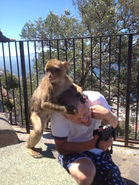 Monkeys at Gibraltar