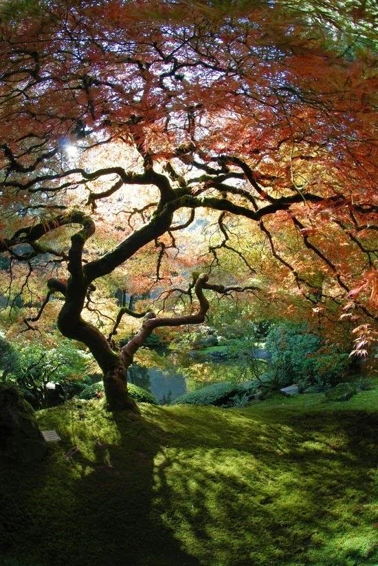 Apanese garden