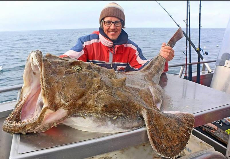 Mondo Pesca News: NORVEGIA: catturata rana pescatrice da ... Oarfish Swimming