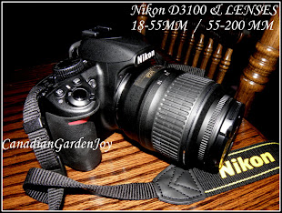 My Nikon D3100